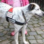 Diabetes-Warnhund Blog Kinder Diabetes Typ 1